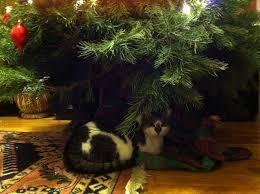 holiday cats the illustrative work of kim scafuro