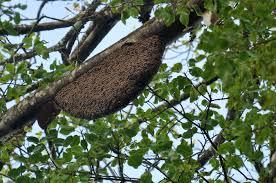 file rock bee hive dsc 5826 jpg wikimedia commons