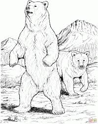 bear pictures color grizzly coloring pages children care bears
