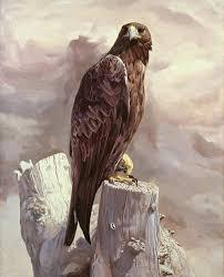 nerea golden eagle portrait