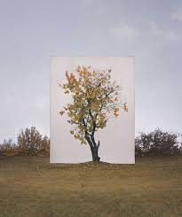 canvas backdrops turn actual trees into 2d artworks twistedsifter