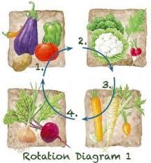 rotation and companion planting bioterra
