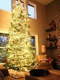 layered noble fir christmas trees natural christmas trees