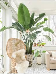 top 5 indoor plants of 2016 plants indoor and interiors