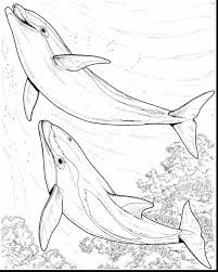 fantastic hard dolphin coloring pages with dolphin coloring page