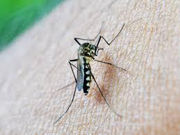 Best Plant For Mosquito Repellent Best Natural Mosquito Repellent Recipe