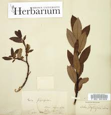 brown collection brown s herbarium is a collection of ecology geography and history