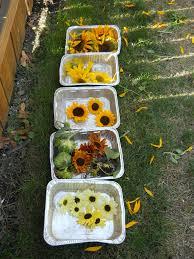 saving flower seeds living in the garden