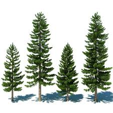 3d pine tree растения pine tree 3d and paintings