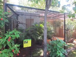 aviary mariana fruit dove zoochat