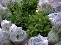 how to dispose of your christmas tree u2014 responsibly recycling the