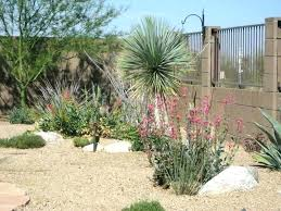 Backyard Desert Landscaping Ideas Desert Landscape Ideas Backyard Desert Landscape Ideas Alluring