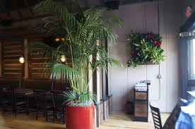 Home Interior Plants by Tropical Plant Technician U2013 Professional Training For Interior