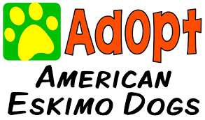 american eskimo dog rescue michigan animal rescue directory animalrescuedirectory net