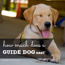 Sponsor A Puppy For The Blind How Much Does A Guide Dog Cost Puppy In Training