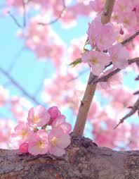 favorites washington d c cherry blossoms rachel e h photography