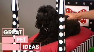 Dog Beds Made Out Of End Tables How To Make A Diy Dog Bed Pets Great Home Ideas Youtube