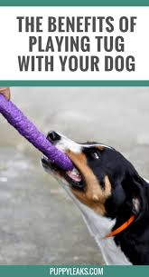 109 best images about duke my dog u0027s life on pinterest dog