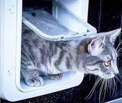Interior Pet Door For Cats Dog Doors Pet Doors Cat Doors All Sizes U0026 Types