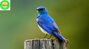 North Dakota birds images Top 15 most beautiful u s state birds jpg