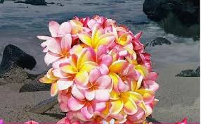 wedding flowers hawaii hawaiian wedding flowers stargazer plumeria wedding bouquet
