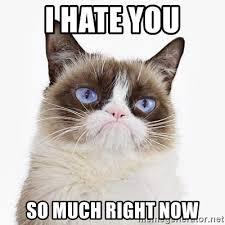 Grump Cat Meme Generator - i hate you so much right now aj grumpy cat meme generator