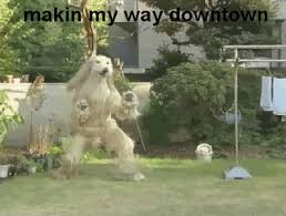 Making My Way Downtown Meme - makin my way downtown gifs get the best gif on giphy