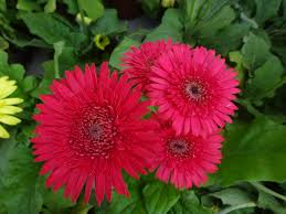 file beautiful flowers 3 jpg wikimedia commons