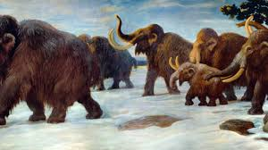 tragedy woolly mammoth economic problem