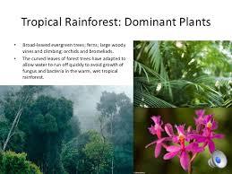 Tropical Savanna Dominant Plants - 10 biomes