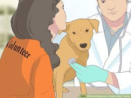 How Does A Guide Dog Help A Blind Person How To Become A Guide Dog Trainer 11 Steps With Pictures