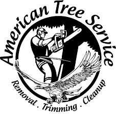american tree company 58 images american tree service tree