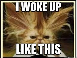 I Woke Up Like This Meme - i woke up like this bad hair cat meme generator
