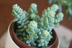 indoor plants that don t need sunlight favorite things indoor plants lush to blush