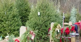 cut your own or choose a pre cut christmas tree hidden pond