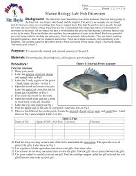 bony fish anatomy worksheet images learn human anatomy image