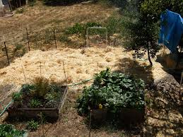 mulches types and uses homestead and gardens