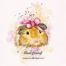 guinea pig vectors photos psd files free download