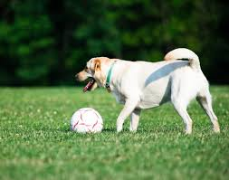 Dog In The Backyard by What Can Dogs Play With In The Backyard Dog Care The Daily Puppy