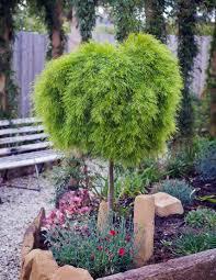 Decorative Shrubs Native Shrubs U2014 Plants Plus Cumberland Forest