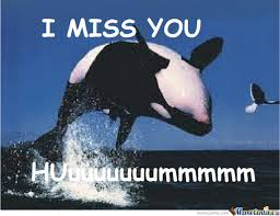 I Love You Meme - i miss you whale by shak112 meme center