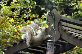 4 fun squirrel feeders for backyard entertainment landscaping