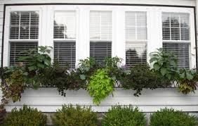 ideas for a french country garden windowbox com blog