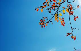 Autumn Colors Autumn Colors S Captivating 1440x900 221183 Autumn