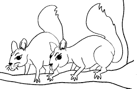 free printable squirrel coloring pages kids