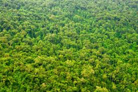 amazon rainforest native plants amazon rainforest may be more resilient to deforestation than