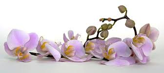 Flower Orchid Free Photo Orchid Flower Blossom Bloom Bud Free Image On