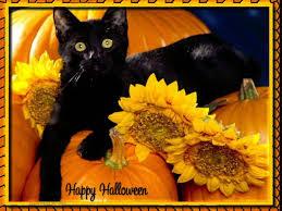 happy halloween screen savers halloween screensavers free free beautiful halloween cat