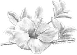drawn hibiscus basic pencil and in color drawn hibiscus basic