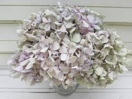 Hydrangea Home Decor Dried Hydrangea Flowers 10 Stems Lavender Pink Creamy White